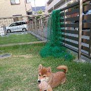 柴犬好きのグループをLINEで作りました。