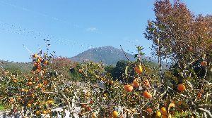 茨城、千葉の写真を気楽に撮りませんか? 秋ですね。