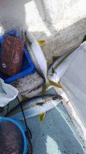 若狭湾西部の海釣り 皆様 ご無沙汰しております。  船を降りることを思い直して 一人での釣りでなく メンバーを集めて釣行