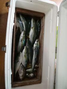 若狭湾西部の海釣り 追伸 ツバスの気配あります。 21日のツバスなど