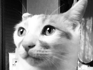 3038 - (株)神戸物産 赤いネコは中国共産党を揶揄してるにゃ。