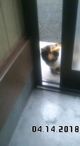 ペットを飼ってる方 まぁ、それが汚い臭い猫ちゃんでしてね。 寝ていた場所や座っていた所を見ると下痢便が漏れてるんですよ。