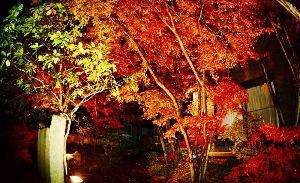 趣味お持ちの方  こんにちは。  庭のライトアップ