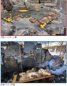 問題解決志向 Googleが露天風呂のストリートビューを公開しました。 今回公開されたのは、北海道から大分まで全国