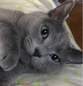 4565 - そーせいグループ(株) 人気者にうちの猫がジェラシーだそうです