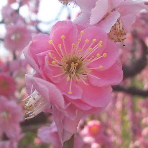 ゆっくりと・・・ もうすぐ、春ですねぇ🎵🎵🎵 関西は梅が満開です✌️  けん^^v
