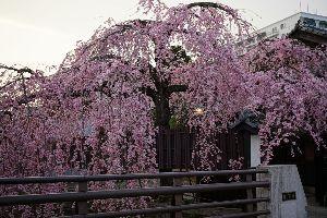 40代前後ならどなたでも(*^_^*) お久しぶりぶり~! お花見の季節ですね♪