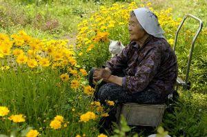 誰も寄って来ない。 うんうん、猫になりたい~~  猫になれなければ、 将来こういうばあちゃんになりたい!!