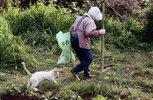誰も寄って来ない。 できれば、ばあちゃんにはなりたくないが、 猫にはなりたい。   でも、猫を可愛がるばあちゃんになって