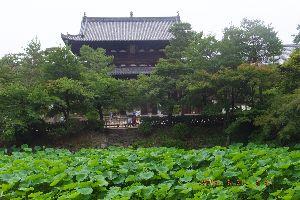 主婦の部屋♪あれこれと~                            昨日は京都。宇治で催された JR東海主催のハイ