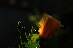 自己満足の世界 花の話ではないのです^^; 南に傾いた太陽の光が描き出す明と暗 色彩、それらのコントラストが美しく感