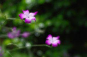 自己満足の世界 タイトル・・・支える力  か細い茎が、渾身の頑張りで重たい花を支えていました。