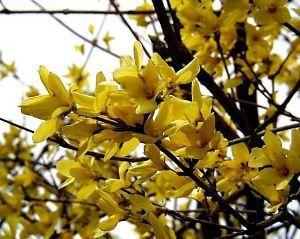 笑顔で~♪♪ おはようございます yumeさん  意外と寒い朝です。 これから太陽が出るのでしょう。 晴れると花粉