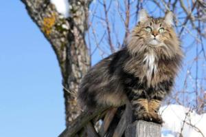 新説犬の気持ち猫の気持ち 木登り