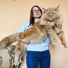 新説犬の気持ち猫の気持ち わ