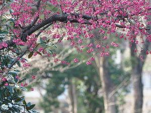 デジカメ写真で遊びましょう こんにちは、みなさん。  春も本番になってきました。高知が桜開花一番乗り。我が福岡は来週かな?  さ