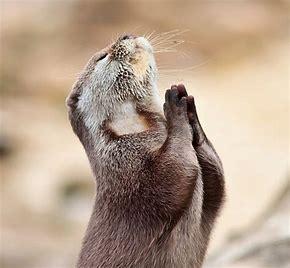 2160 - (株)ジーエヌアイグループ 何回、同じ投稿を繰り返しているの?  いつのことか分からないことばかりで、欲ボケ信者の祈りに近いな