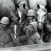 侵略戦争の事実を隠して日本の未来は見えますか・・・ そして、一頭も還ってこなかった・・・            二度と帰れない「物言わぬ兵士」