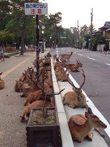 ☆ここが回文部。いかが?ここ☆ 鹿しかいないか、しかし。 (しかしかいないかしかし)  猫どこね?