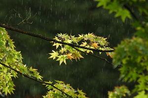 いい加減な料理といい加減な考え方 カタコリさんおはようございます、今朝は久し振りの雨です、しとしとと降っていますが、仰る様に気温の変化