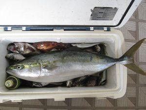 秋田の釣り! 最近投稿がほとんどなくなりましたねぇ  最近の釣果を報告します。20日はクロソイ、マゾイ、カサゴそれ