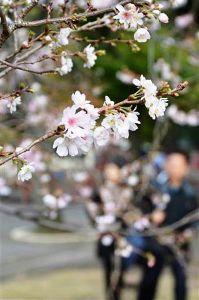 片思いのつぶやき こんばんは(^-^)  ももこさん、杏さん、皆さん、お疲れ様です。  雨で小寒い1日でしたね。  明