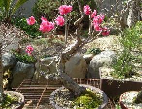 あなたとならば・・・・ こでまり さん こんにちわ~ 少し間をおいて済みません! ここ春の陽気でしたが 今日は小☂になりまし