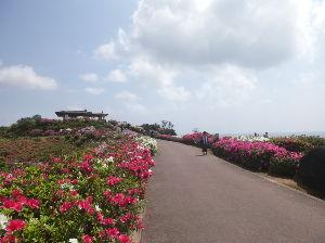沖縄在住のお友達募集です! kahcoさん、こんにちはー♪ 4月と5月に沖縄に来られるのですねー♪  4月の日曜日の午後、大丈夫