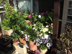 株・カフェ 露草さん、トマトさん、みいこさん、そして皆さん、こんにちは。 近頃は暑い日もあればそうでなく、上に羽