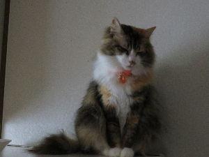 癒されるとき2 我が家の主   嫁曰く、猫のイクメン!