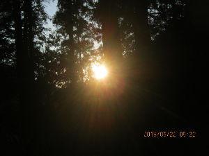 甲斐犬と共に 今朝も早くから一緒に山へ行ってきました 朝日が昇るのを撮影  今日は今のところヤマダニは見えません。
