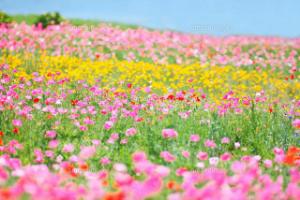 ♪花畑で作ったオックステールスープ♪(改訂版)
