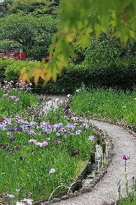 写遊人 亀山、菖蒲公園に行ってきました。 散策道にも一輪、のどかなひと時でした。