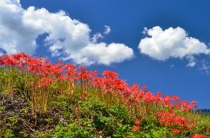 写遊人 澄んだ秋の空に、深紅のお出迎え
