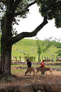 写遊人 奈良公園の鹿と遊ぶ子供