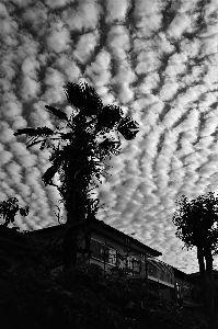 写遊人 今朝方ふと見上げるとすごい雲が、スマホで。 高積雲、ひつじ雲とも呼ばれるようです。