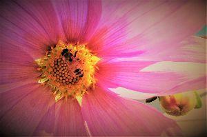 写遊人 皇帝ダリアの蜜を吸うハチ、葉脈の色が綺麗かった。 右下に見えるのは蕾
