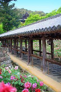写遊人 長谷寺へ牡丹鑑賞に出かける。