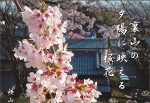 写遊人 写真俳句   yokoyama