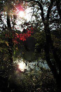 写遊人 朝の散歩中の光景、紅葉が赤く色づいていて、綺麗です。