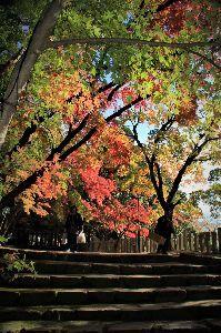 写遊人 永源寺の秋その2