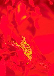写遊人 自然薯の葉が蝕んでいる。
