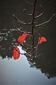 写遊人 過ぎ行く秋を思う、中央公園にて。