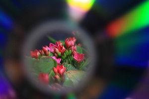 写遊人 CDの中穴を通して見た花の世界。 CDの角度を変化させると、色合いが変わり楽しめた。