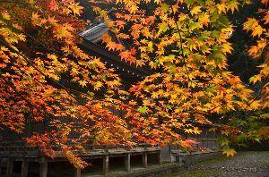 写遊人 秋色に染まる境内 大垣市上石津長彦神社