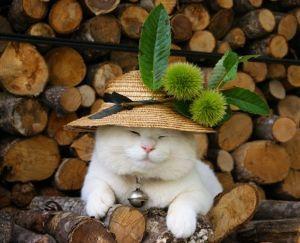 猫声人語 栗が贈られてきた、明日は栗ご飯。