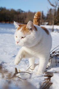 猫声人語 初雪が降ったぞー
