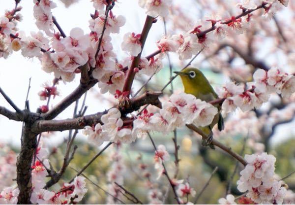 食レポ3 出かけてて途中で見た時はヒャーー💦 さっき帰ってきて見てちょっとホッ♡ 今日は大阪城の梅の花見に メ