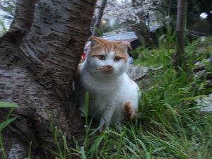 7267 - ホンダ 株猫ジョージ君が驚いています。 NY市場3指数続伸、ドル109円回復ニャンコ。 引けにかけて利確ある