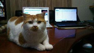 7267 - ホンダ 株猫ジョージ君が期待しています。 世界の市場はしばらく総じて堅調推移ニャンコ。 急騰はないながら上昇